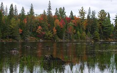 Tea lake Dam (S. J. Coates Images) Tags: algonquin algonquinpp autumn fall colours trees