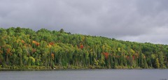 Openongo Road (S. J. Coates Images) Tags: algonquin algonquinpp autumn fall colours trees