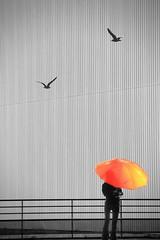 Perfection irréelle... (Tonton Gilles) Tags: alençon normandie graphisme lignes motifs goélands personnage parapluie rouge noir et blanc partiel triangle scène de rue photomontage