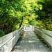 Wooden Walk Path in Nature