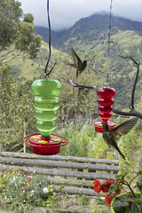 Colibris (magnetic_red) Tags: birds hummingbirds colibri colombia view vista mountains clouds red green inflight