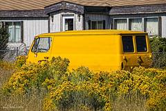 Yellow Jacket    .....  HTT! (jackalope22) Tags: htt truck van chevy yellow
