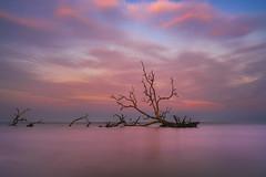 Hunting Island Sunset [EXPLORED] (Travis Rhoads) Tags: 2019 sonyilce7rm2a7rii zeissbatis25mmf2 reallyrightstuff ba72l bh55 rrspcl1 tvc33 formatthitechfirecrest10stopnd leefoundationkit clouds coastal landscapephotography longexposure nikcollectionbydxo ocean sunset trees copyright2019 travisrhoadsphotography water southcarolina huntingisland