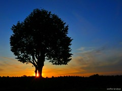 Jeder Moment ist einzigartig (every moment is unique) (skruemel86) Tags: sonnenuntergang thüringen ilmenau baum himmel sonne wolken landschaft panasonic lumix fz82 sunset sun sky tree landscape clouds deutschland
