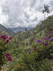 La Finca Carbonera (magnetic_red) Tags: trees flowers green nature view vista waxpalms colombia lacabonera