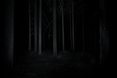 deep silence (the ripped bystander) Tags: blackwhite forest darkness night light