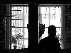 City Cafe (Edinburgh Photography) Tags: shadows silhouettes window cafe man documentary photojournalism blair street edinburgh nikon d7000 avril