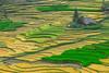 _J5K1642.0814.Lao Chải.Sapa.Lào Cai (hoanglongphoto) Tags: asia asian vietnam northvietnam northwestvietnam northernvietnam landscape scenery vietnamlandscape vietnamscenery sapalandscape terraces terracedfields terracedfieldsinvietnam terracedfieldinsapa seasonharvest seasonharvestinsapa house hillside ridgehill canoneos1dsmarkiii canonef100400mmf4556lisusm tâybắc làocai sapa laochải ruộngbậcthang ruộngbậcthangsapa lúachín mùagặt sapamùalúachín sapamùagặt sườnđồi ngôinhà