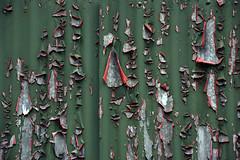 Basingstoke Canal Ash Vale 22 September 2019 005 (paul_appleyard) Tags: basingstoke canal ash vale boathouse peeling paint corrugated iron september 2019