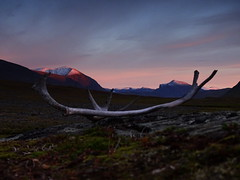 Antlers and mountains (dration) Tags: sweden lapland kungsleden sunset evening mountain sky landscape