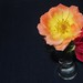 Going on hiatus: orange and red roses in vase, black surroundings