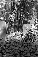 Jewish Cemetery (ucn) Tags: berlin jewishcemetery jüdischerfriedhof schönhauserallee prenzlauerberg zeissikondonata2277u tessar135cmf45 ilfordhp5 agfarodinal rollexpatent6x9cm