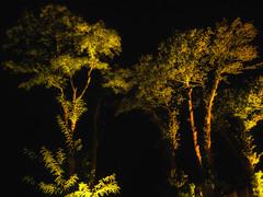 Let us live (Zoom58.9) Tags: trees light green nature outside licht darkness sony natur grün bäume draussen dunkelheit sonydscrx10m4 live leben