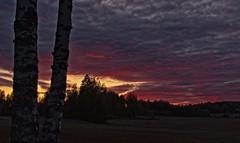 September Sunset (felix200SX) Tags: sunset september finland sky trees clouds canon 70d field