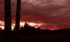Hell Over Earth (felix200SX) Tags: sunset september finland sky trees clouds canon 70d field