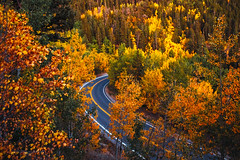 It's the most wonderful time of the year... (miss.interpretations) Tags: autumn fall fallcolors orange yellow aspens leaves foliage colorado autumnincolorado flickr coloradophotographer idahosprings rachelbrokawphotography missinterpretations glorious colorful radiant canon6dmarkii