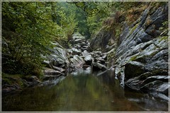([JBR]) Tags: stone pierre piedra rock rocks rocky grey gris granite granit vert verde green tree arbol arbre forest foret salendrinque lasalle gard 30 30460 55 555 2019 automne septembre september