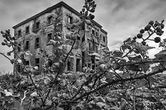 Brambles and bricks. (Sean Hartwell Photography) Tags: tyronehouse galway ireland brambles ruins ruin manor house