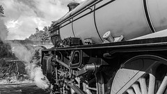 61306, Winchfield, 26 September 2019 (26) (BaggieWeave) Tags: 460 61306 bw b1 br blackandwhite britishrailways edwardthompson england hampshire lner mayflower southwesternmainline steam steamdreams steamengine steamlocomotive uk winchfield hook unitedkingdom