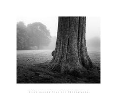 Seaton Park in Aberdeen.. (LoneWolfA7rii) Tags: art aberdeen bw black blackandwhite fog uk landscape mono mist monochrome nature outdoors old scotland trees white weather