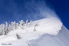 Ovunque il vento  mi porterà, voglio vedere che c'è ... (silvano fabris) Tags: canonphotography wildlifephotography neve inverno montagna vento snow nature mountain winter