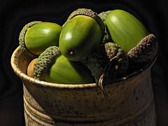 Autumn Fare (Nick_Fisher) Tags: nickfisher macro zerene stacked stack rail olympus seed nut fruit autumn fertility propagation hdr omd em10 mark ii olympusomdem10markii