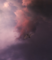 006 (petrisalonen) Tags: swan bird birdphotography sunset sky sunrise sun suomi sunlight flying fly finland fin finnishnature fog clouds colors rays sunshine sunrays joutsen landscape light red magenta purple couple finishnature fi evening