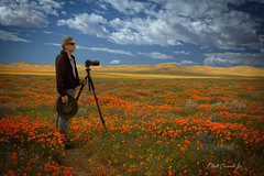 Antelope Valley Poppy Reserve (Elliott Cowand) Tags: poppies flowers wildflowers superbloom poppyfields california nature exterior landscape allrightsreserved copyright elliottcowandyahoocom elliottcowand antelopevalley camera cameraman photographer tripod lancastercalifornia blooms californiapoppy losangelescounty bloom rollinghills spectacle amazing sight beautiful