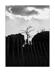 trapped tree (Armin Fuchs) Tags: arminfuchs nomansland fence tree sky clouds rocks anonymousvisitor thomaslistl wolfiwolf jazzinbaggies niftyfifty hff