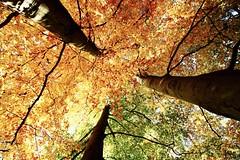 Autumn in Stockholm / Djurgården (mortezarohani2) Tags: stockholm djurgården autumn orange tree leaves yellow canon 80d