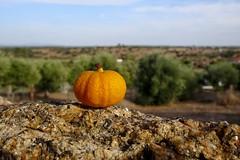 HX00117_2048 (a.marquespics) Tags: zeiss 30x zoom sony hx90v orange laranja solitária alone fruto fruit evening entardecer closeup variosonnart bud baby