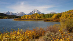 AUTUMN's Grand Finale (laura's Point of View) Tags: oxbowbend gtnp grandtetonnationalpark tetons snakeriver autumn color aspens aspen trees mountains sky water river willows beautiful awesome wyoming west western nature natural lauraspov lauraspointofview landscape waterscape fall seasons nationalpark
