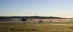 Morning Comfort (SteveKPhotography) Tags: stevekphotography sony alpha a99ii ilca99m2 tamron 2470mm landscape fog weather scenery scenic countryside morning dawn trees hills brooktonhighway westernaustralia nature