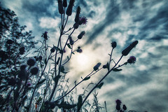 Autumn silhouettes (BigWhitePelican) Tags: finland nature silhouettes sun sky clouds canoneos70d adobelightroom6 niktools 2019 september
