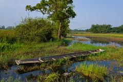 Old dugout 1e (SierraSunrise) Tags: thailand isaan esarn phonphisai nongkhai boats canoe wetland swamp nong