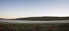 Tranquil Dawn (SteveKPhotography) Tags: stevekphotography sony alpha a99ii ilca99m2 tamron 2470mm landscape fog weather scenery scenic countryside morning dawn trees hills brooktonhighway westernaustralia nature