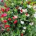 Freitagsblümchen, 20190925_130008_be-2