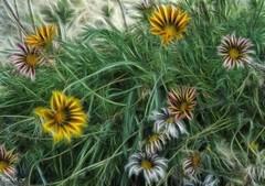 Jardines de Palacio (pedroramfra91) Tags: exteriores outdoors jardin garden flores flowers