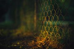 Burning Bright (Sarah Rausch) Tags: sony rikenon5514 bokeh fencefriday hff chainlink fence vintage radioactive vintageglass depth sunset