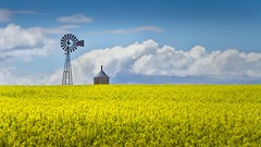 Canola Field Windmill 5644 B (jim.choate59) Tags: jchoate on1pics field agriculture windmill rural springtime yellow canola washingtonstate landscape