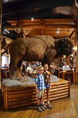 The Kids And The Bison (Joe Shlabotnik) Tags: jackson bison 2019 violet everett august2019 gunbarrel wyoming afsdxvrzoomnikkor18105mmf3556ged