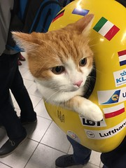 """""""Have cat, will travel"""" (He said) (Pierre♪ à ♪VanCouver) Tags: petcarrierbackpack anonymous felin cat chat kat airport luchthaven flughafen aeroport schiphol amsterdam holland nd"""