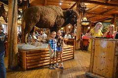 The Kids And The Bison (Joe Shlabotnik) Tags: jackson bison 2019 violet everett august2019 gunbarrel wyoming afsdxvrzoomnikkor18105mmf3556ged faved