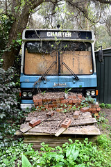 - (_barb_) Tags: australia mtevelyn abandoned bus decay leyland