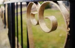 Knocking heads! (Elisafox22) Tags: elisafox22 sony rx100 iron fence hff fencefriday ff fencedfriday painted wroughtiron textured ipad perspective dof grass macduff aberdeenshire scotland outdoors elisaliddell©2019 stackables