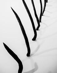 Resist.jpg (Klaus Ressmann) Tags: klaus ressmann abstract castororosemarie fparis france omdem1 winter blackandwhite design detail flicvarious gallery workofart klausressmann