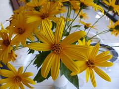Bouquet de fleurs de topinambour (Marie-Hélène Cingal) Tags: landes 40 aquitaine nouvelleaquitaine cagnotte paysdorthe france sudouest fleurs flowers flores