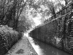 Rose Hill Cutting, Marple    (Peak Forest Canal)   September 2019 (dave_attrill) Tags: rosehill cutting formertunnel marple peakforest canal towpath peakdistrict nationalpark cheshire cheshirering oldknow september 2019 thomastelford blackwhite