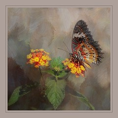 Leopard Lacewing Butterfly (ulli_p) Tags: asia art artofimages aworkofart butterflys canoneoskissx5 flickraward macro nature ruralthailand southeastasia thailand texture textured texturedphoto