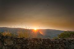 Sonnenaufgang Toskana (markusgeisse) Tags: toskana tuskany italien italy sunrise orange sky sonnenaufgang himmel mauer wall light licht sony alpha